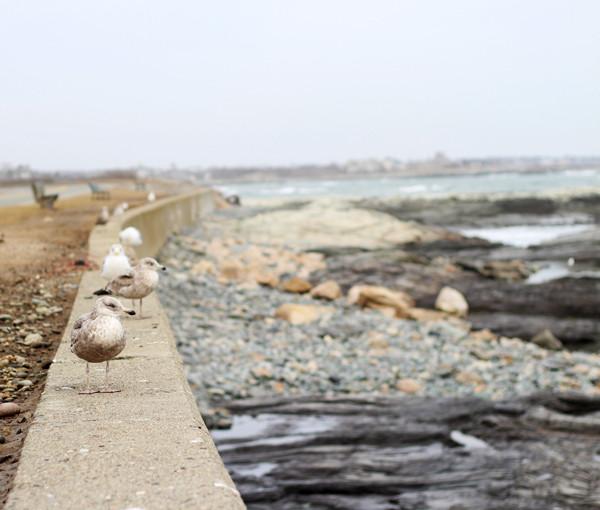 Quiet-Beach-Scene