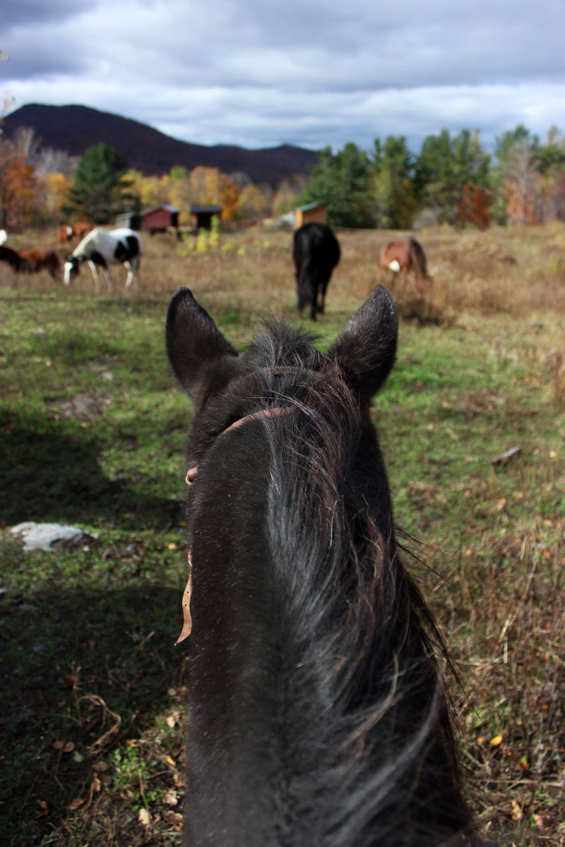 horseback-riding-chipman-stables-manchester-vermont-activities